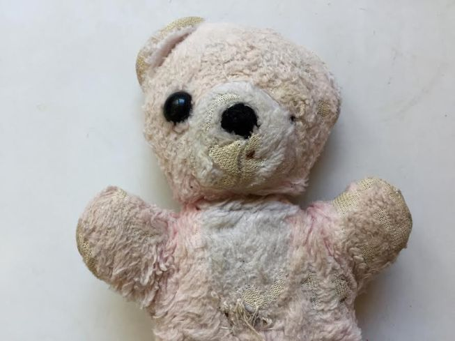Teddy - loved by Rachel for 37 years.